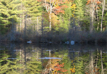 Erving State Forest & Laurel Lake Recreation Area