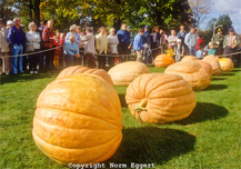 Phillipston Fall Pumpkin Fair